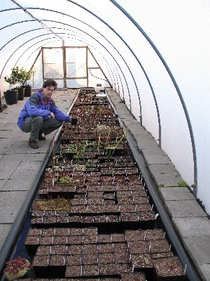 Keith in polytunnel